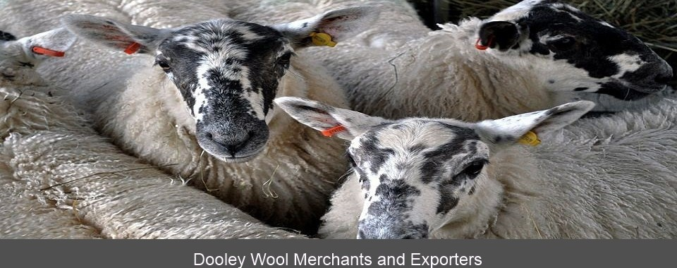 Dooley Wool Merchants and Exporters